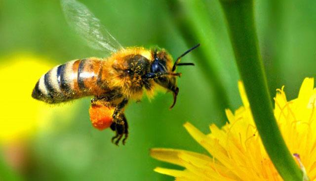 Aquecedor em colmeias salva as abelhas do frio de Santa Catarina