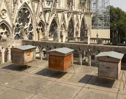 Abelhas que vivem na catedral de Notre-Dame sobreviveram ao incêndio